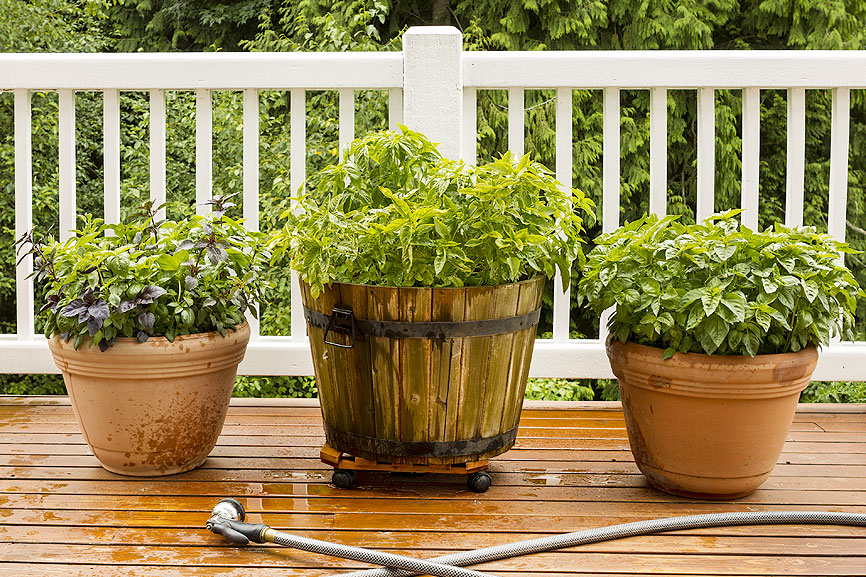 Betterlawns container gardening image better lawns and gardens rhode island - Better homes and gardens container gardening ...